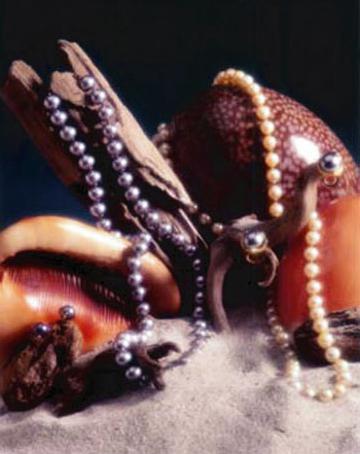 Pearla-&-Shells